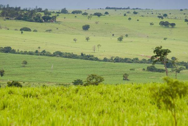Wo es jetzt aussieht wie im Schweizer Mittelland, war einst brasilianischer Regenwald. Der Grund für diesen Wandel: Hungrige Schweizer Kühe.