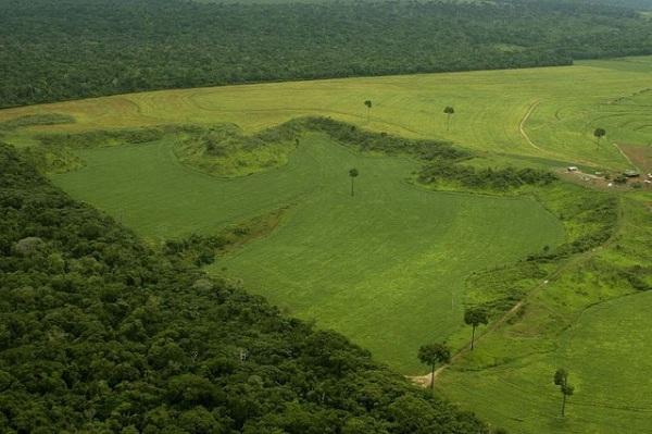 Nur weil die Grenze sauber gezogen ist, muss sie deswegen noch lange nicht legal sein: Illegal gerodeter Regenwald in Brasilien. (c) by Leonardo Freitas